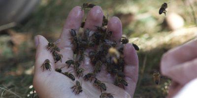 abeilles main yoga 2